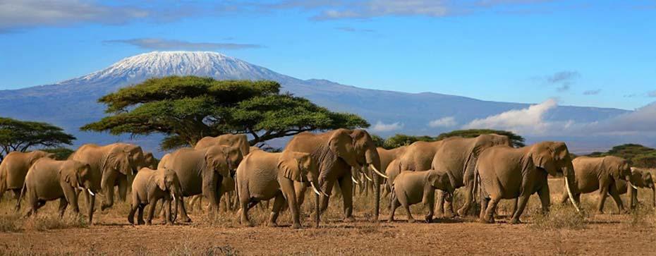 горящие туры в танзанию
